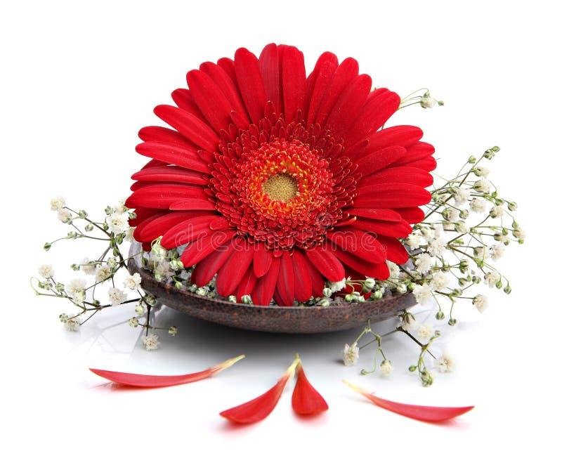 kwiatu gerbera zdroju łyżka zdjęcie stock