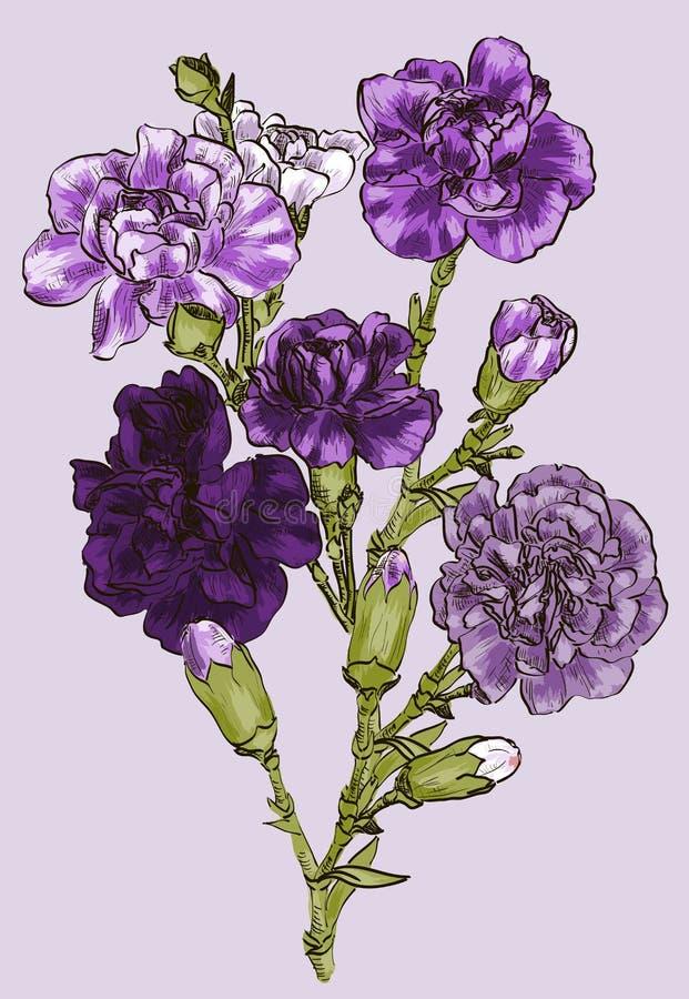 Kwiatu goździk ilustracja wektor