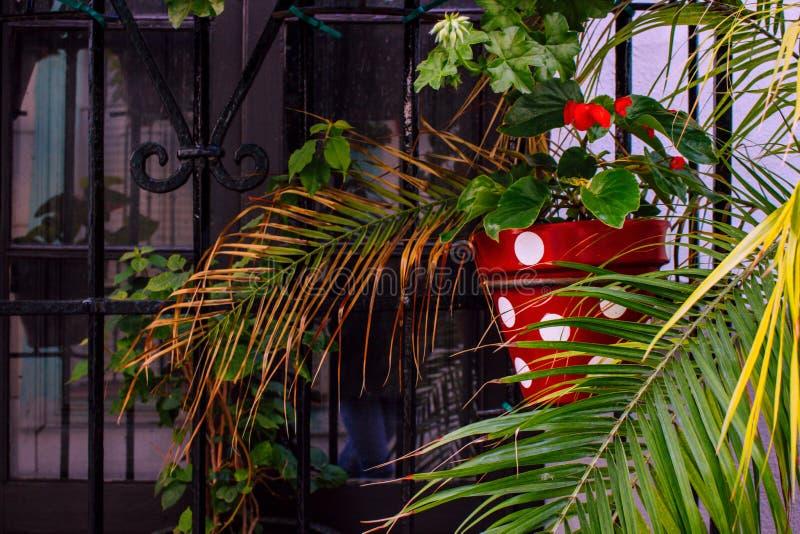 kwiatu ilustracyjny garnka wektor obrazy stock