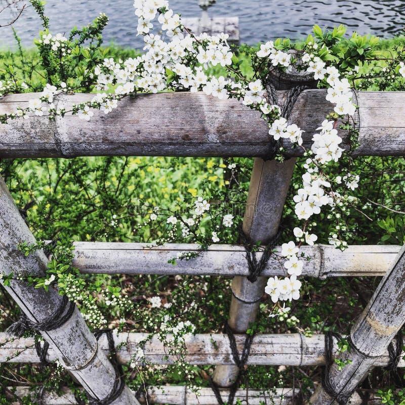 Kwiatu Japan zakończenia zoom zdjęcia stock