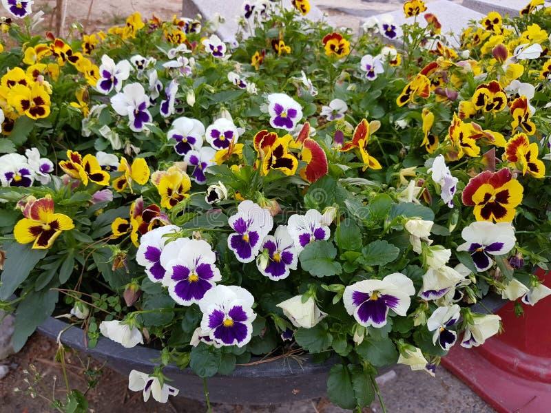 Kwiatu Jawny park fotografia royalty free