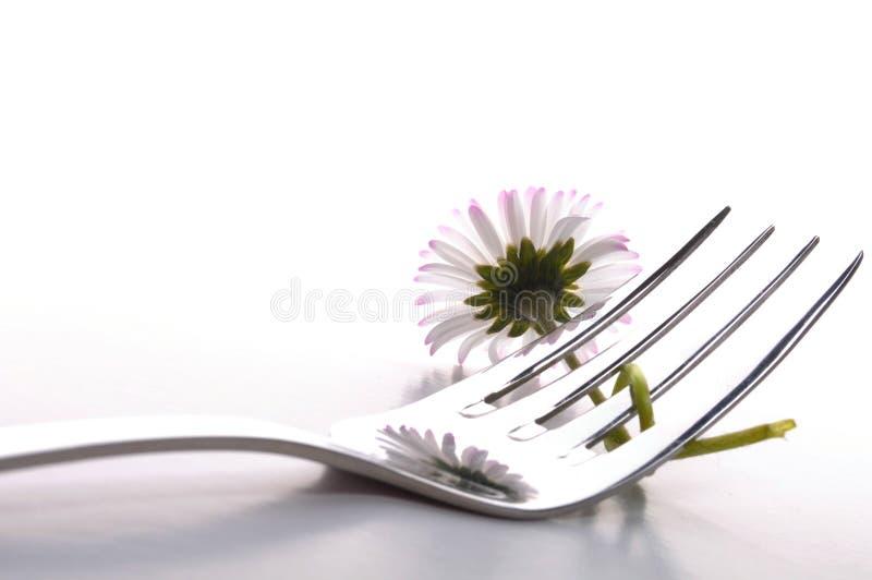 kwiatu jedzenie zdjęcie stock