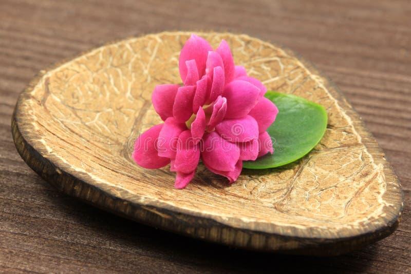 kwiatu kalanchoe zdrój fotografia royalty free