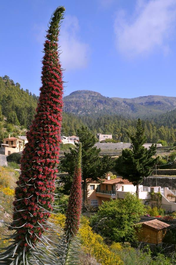 kwiatu klejnotów Tenerife wierza obraz stock