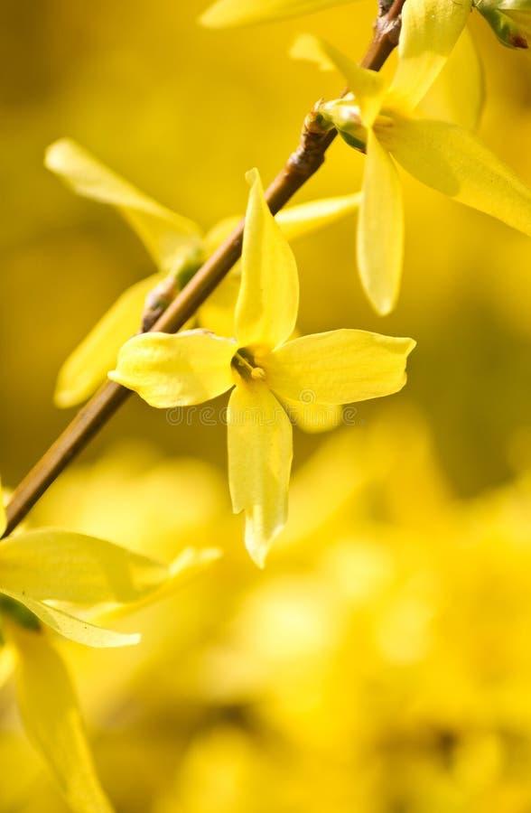 kwiatu kolor żółty obrazy stock