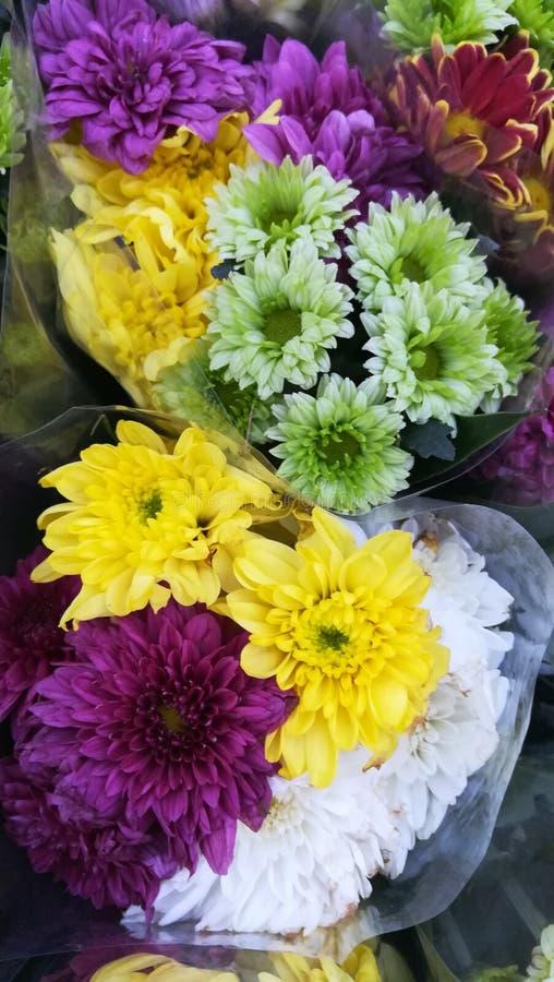 Kwiatu kolor zdjęcia royalty free