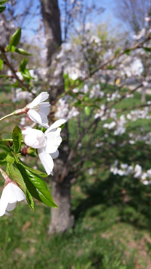 Kwiatu kwiat fotografia stock