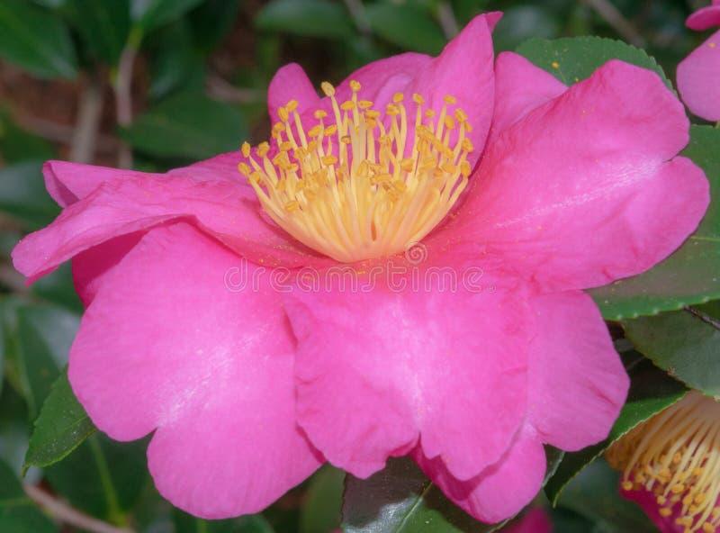 Kwiatu kwitnienie w wiośnie gotowej dla Wielkanocnej Niedzieli zdjęcia royalty free