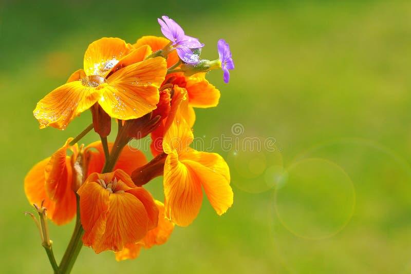 kwiatu lato zdjęcia royalty free