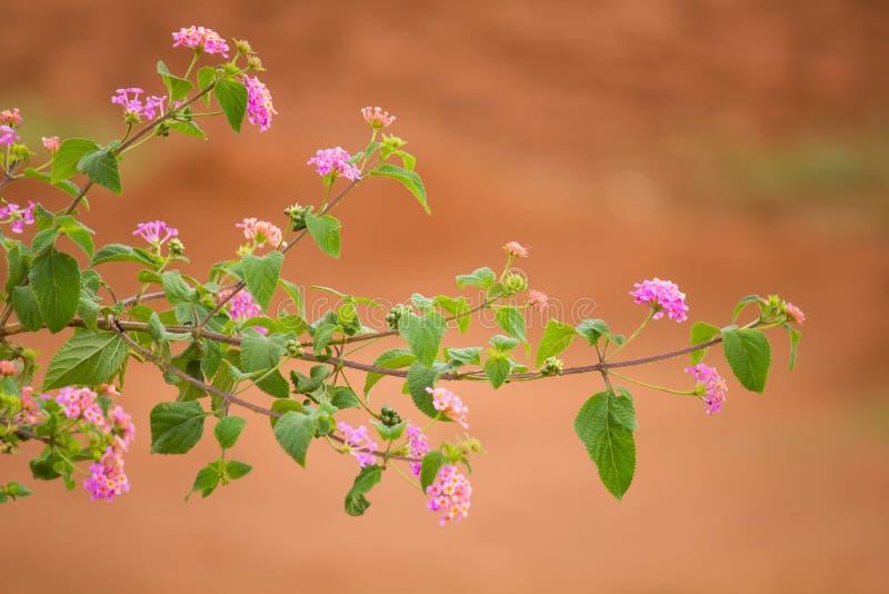 Kwiatu liść obraz royalty free
