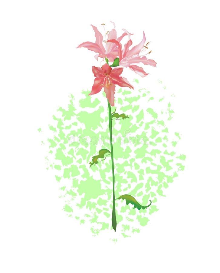 kwiatu Lili menchie ilustracja wektor