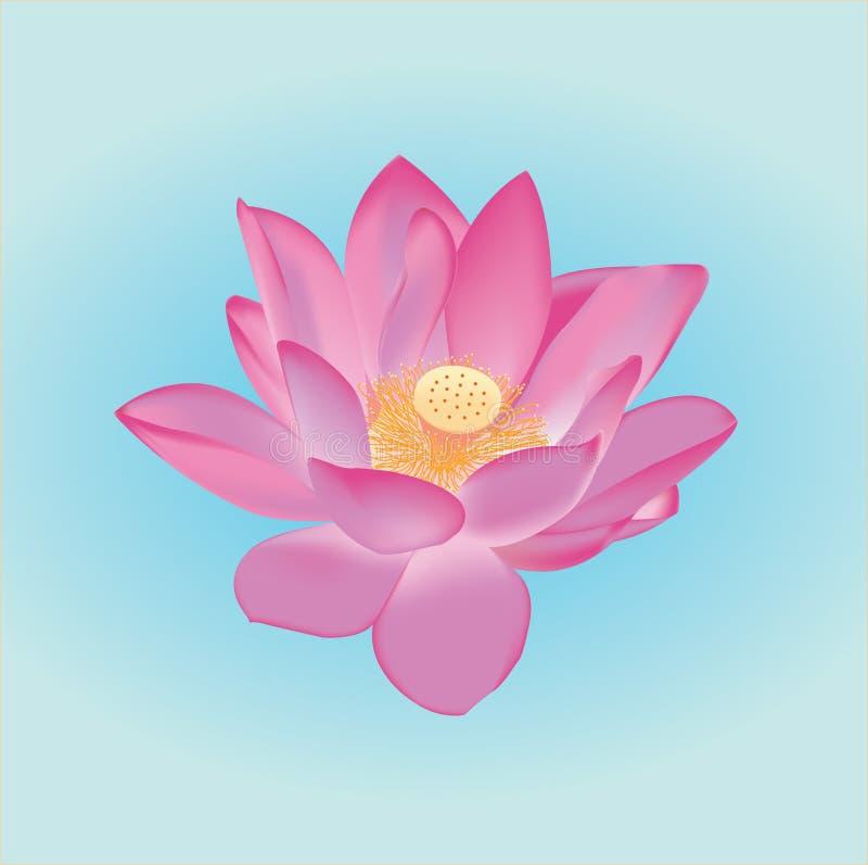 kwiatu lilly lotosu wektoru woda ilustracja wektor