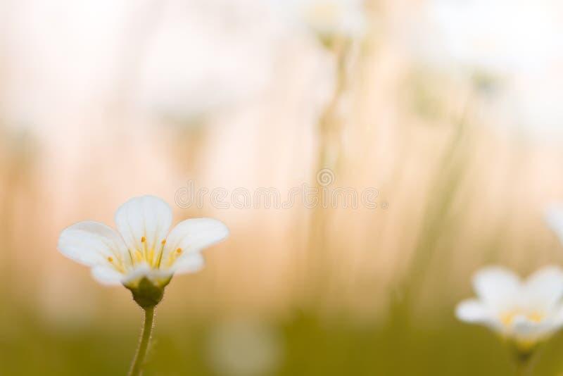 Kwiatu mały badan w świetle słonecznym Selekcyjna ostrość obrazy stock