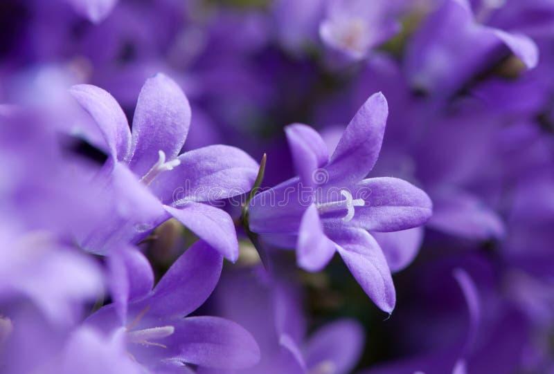kwiatu macro obraz royalty free