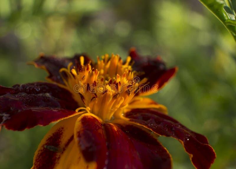 Kwiatu makro- strzał z ładnym bokeh fotografia stock