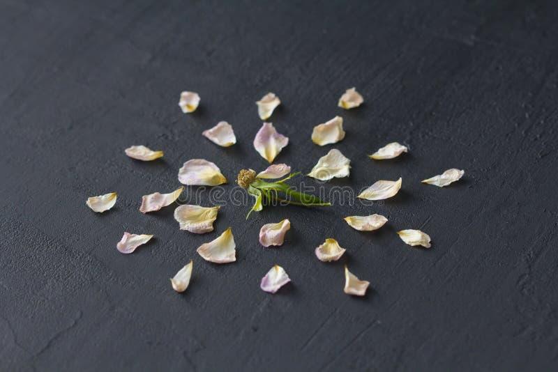 Kwiatu mandala na Czarnym Ciemnym tle Geometrical kwiecisty sk?ad Kolorowy jaskrawy round wz?r opuszcza i kwitnie kwiecisty zdjęcia stock