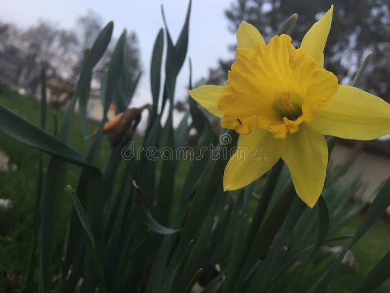 Kwiatu miasteczko fotografia royalty free