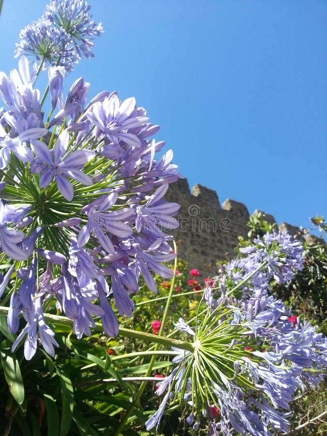 Kwiatu nieba lata ścienny światło słoneczne zdjęcia stock