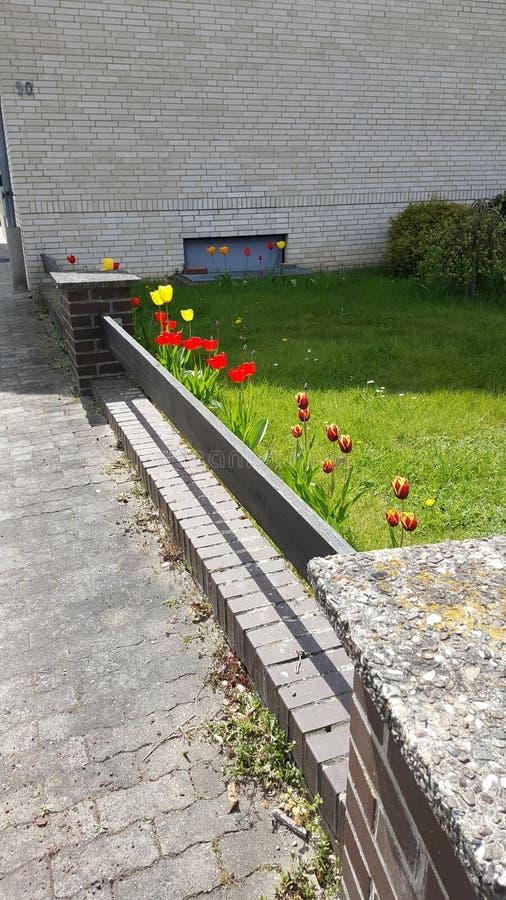 Kwiatu ogród obraz stock