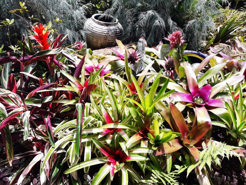 Kwiatu ogród w Chiang Mai, Tajlandia obraz stock