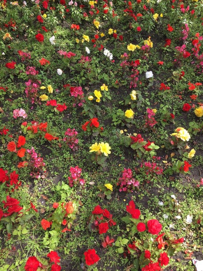 Kwiatu ogród w parku obraz royalty free
