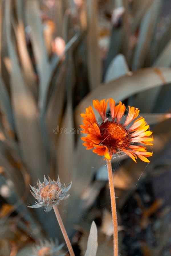 kwiatu ogródu pomarańcze zdjęcia royalty free