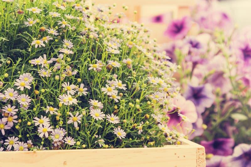 kwiatu ogródu purpury fotografia stock