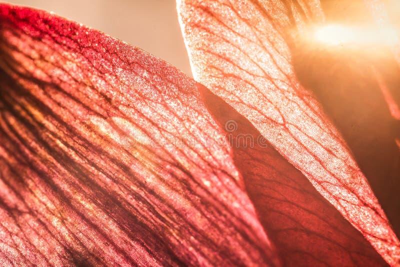 kwiatu ostrości makro- strzału stamens Natury tła fotografia Zbliżenie fotografia textured liść fotografia stock