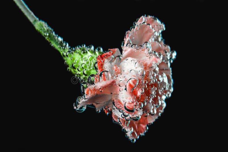 Kwiatu pączek pod wodą obrazy royalty free