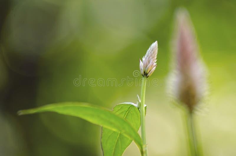 Kwiatu pączek z zielonym bokeh tłem fotografia royalty free