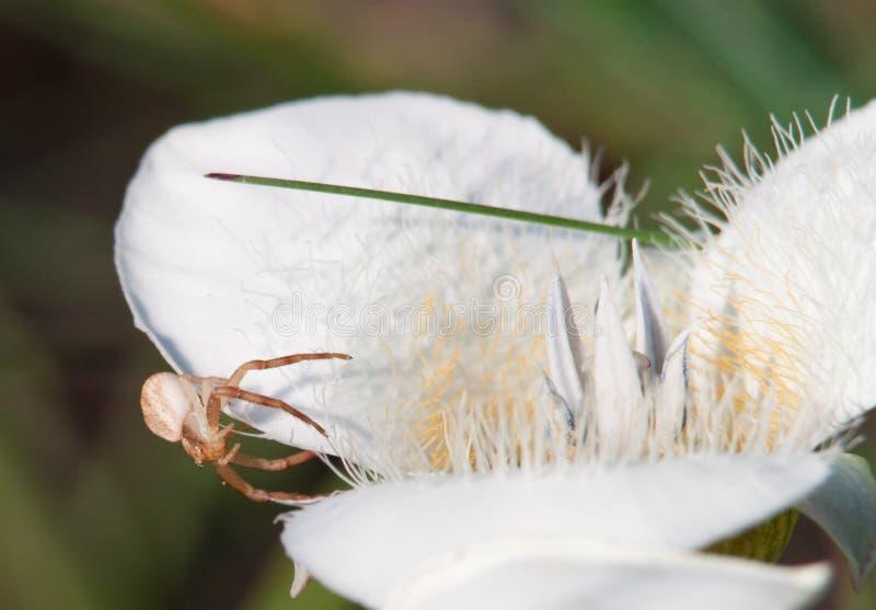 kwiatu pająk zdjęcie royalty free
