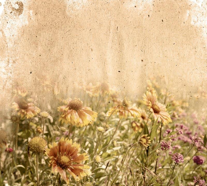 kwiatu papier obraz royalty free