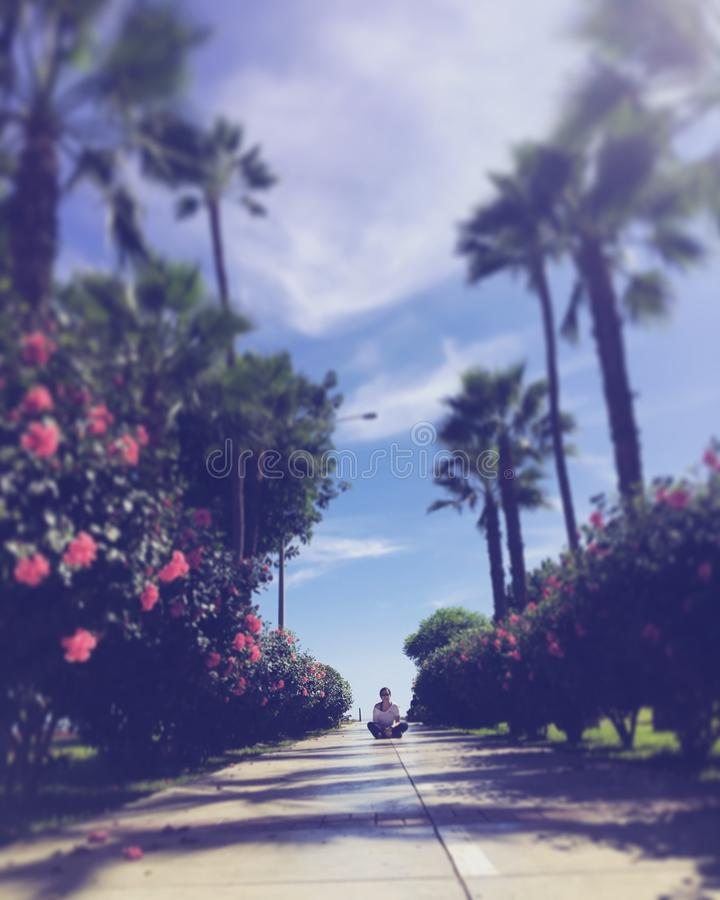 Kwiatu park zdjęcia stock