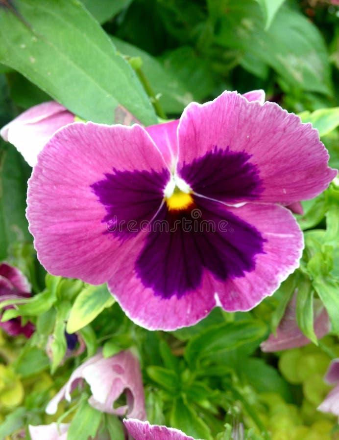 Kwiatu piękno zdjęcia stock