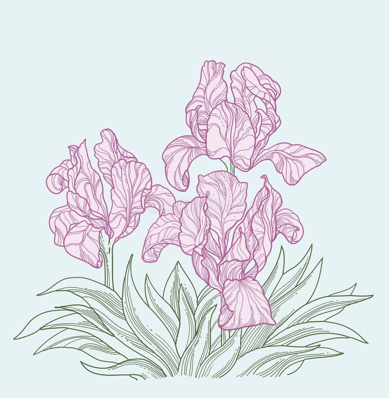 kwiatu piękny irys ilustracja wektor