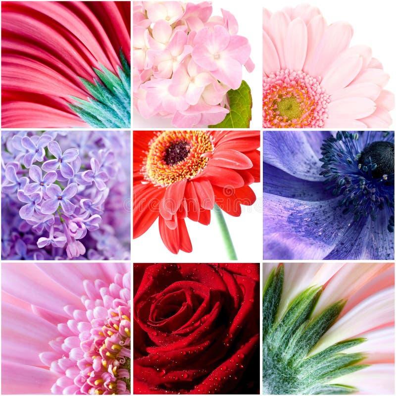 Kwiatu piękny kolaż zdjęcie royalty free