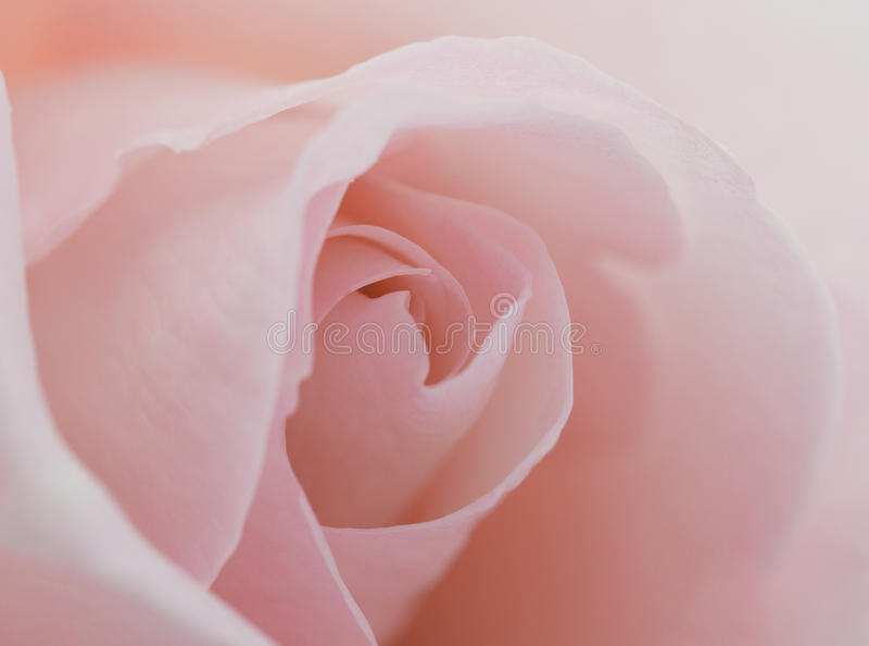 kwiatu piękny macro wzrastał fotografia royalty free