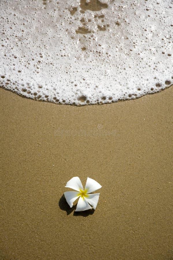 kwiatu piaska morze obraz royalty free