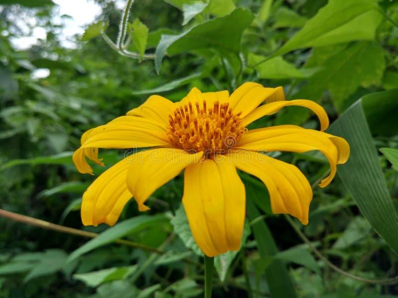 Kwiatu połysk fotografia stock