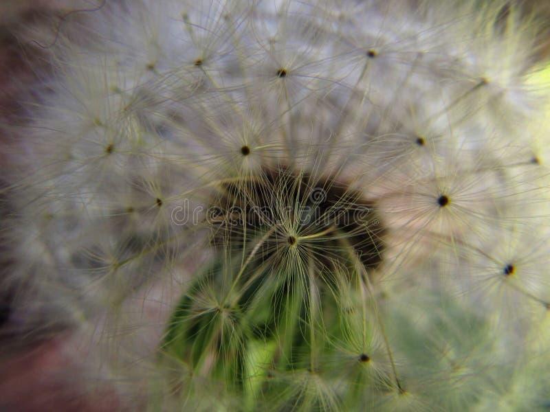 Kwiatu pola mały raj Ukraine zdjęcia stock