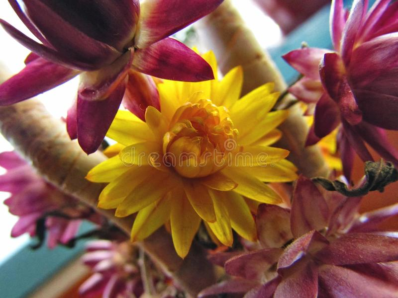 Kwiatu pola mały raj Ukraine fotografia stock