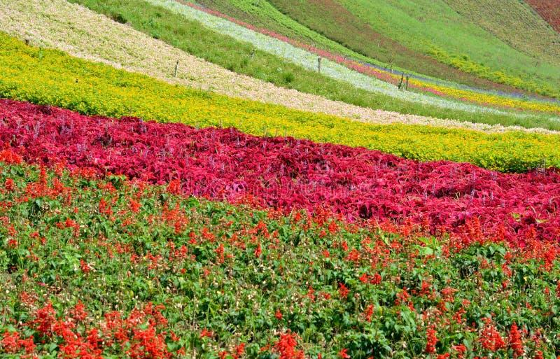 Download Kwiatu pole zdjęcie stock. Obraz złożonej z roślina, natura - 31554378