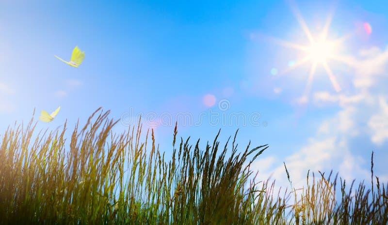 Kwiatu pole w lecie - Abstrakcjonistyczny lata tło zdjęcia stock