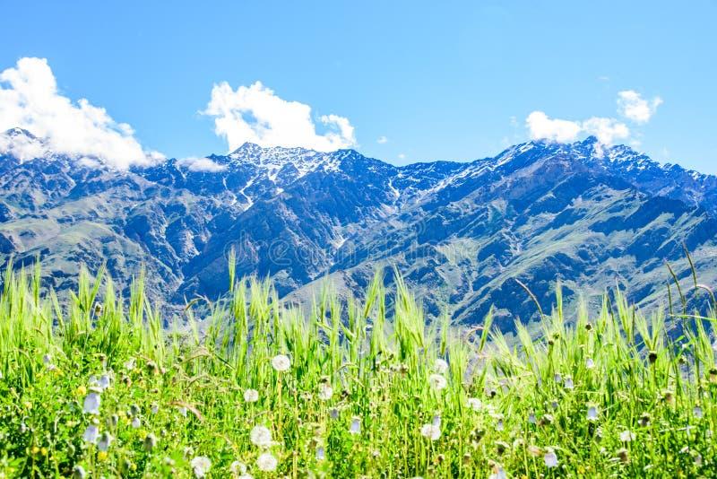 Download Kwiatu Pole Z śnieżną Górą I Słonecznym Dniem Zdjęcie Stock - Obraz złożonej z greenbacks, góra: 57671766