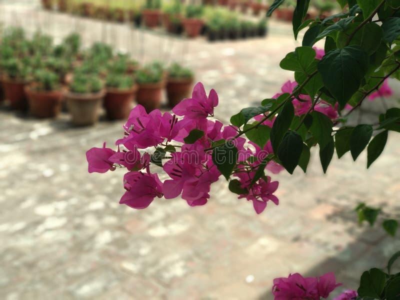 Kwiatu portreta tryb obrazy stock