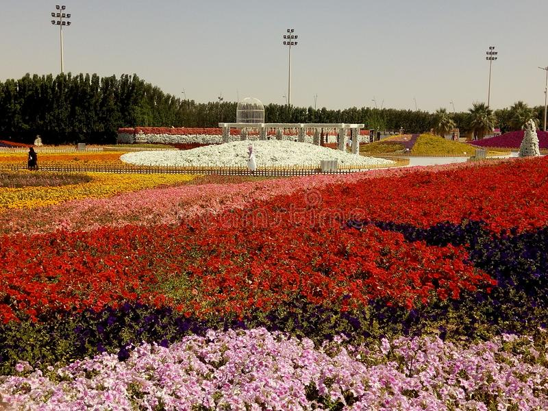 Kwiatu przedstawienie Yanbu zdjęcie stock