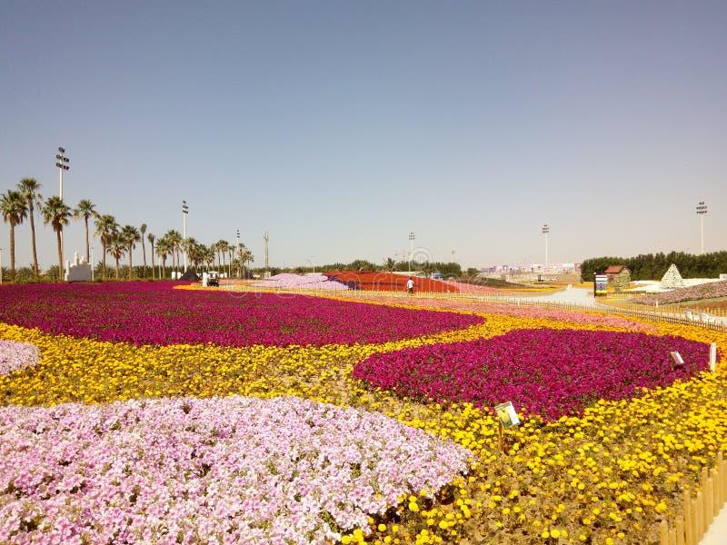 Kwiatu przedstawienie Yanbu zdjęcia stock