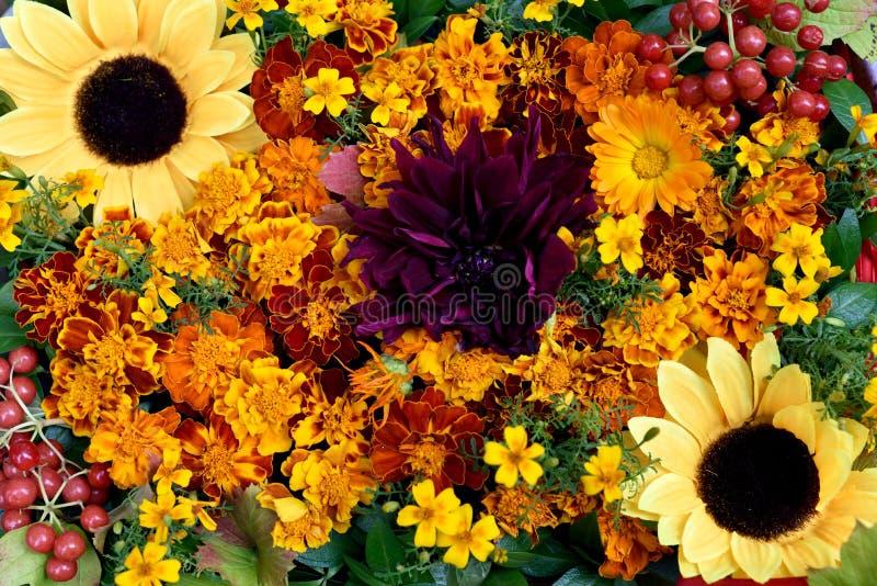 Kwiatu przygotowania nagietki, słoneczniki i czerwony Kalina, obrazy royalty free