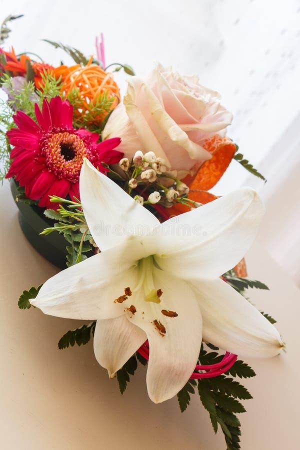 Kwiatu przygotowania w plastikowym pucharze obrazy stock