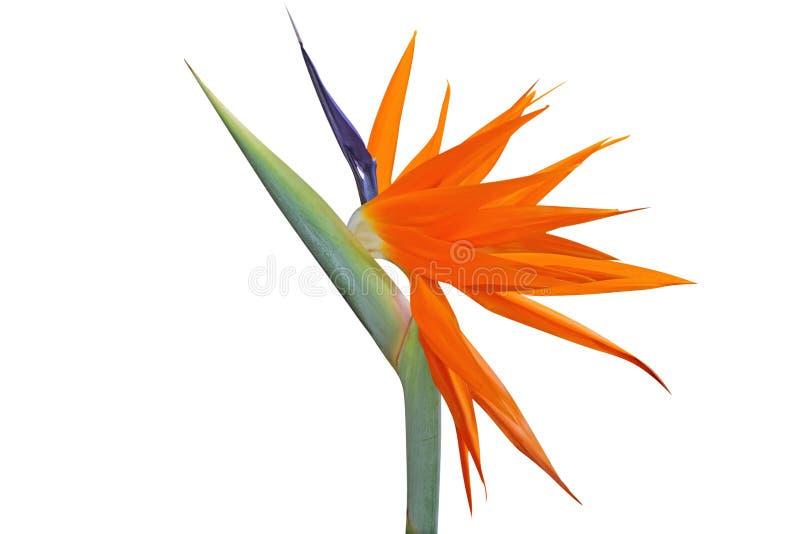 kwiatu ptasi raj fotografia stock
